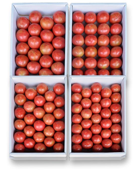 まほろばトマト(1.5kg)